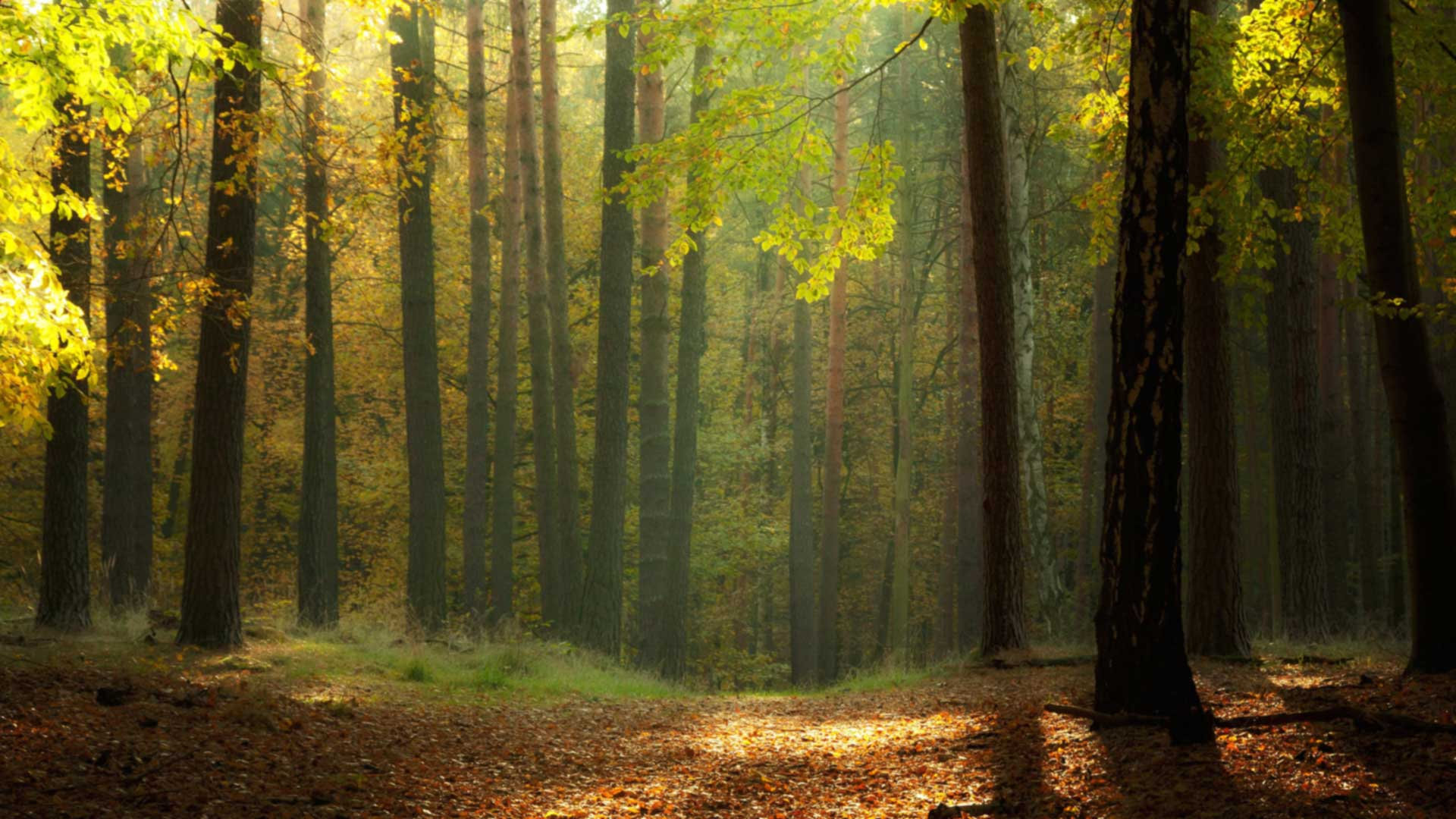 boschi_foreste